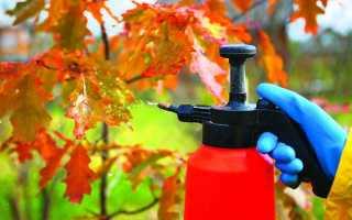 Надо ли опрыскивать деревья осенью