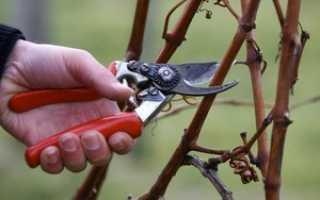 Новая жизнь запущенных виноградников