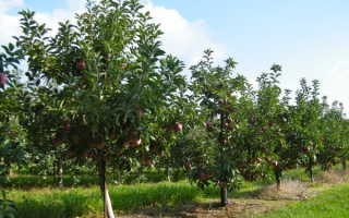 Размещение деревьев и кустарников на садовом участке