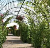 Уютный дачный участок сооружаем виноградник навес