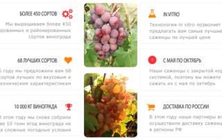 Кинельский виноград лучшие сорта дом и сад