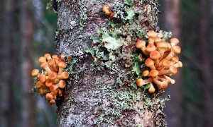 16 древесных грибов растущих на деревьях 33 фото с описаниями