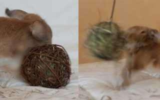 Как сделать игрушку для кролика своими руками