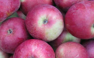 Описание яблони сорта алеся