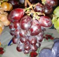 Виноградники двигаются на север