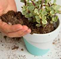 Земля для кактусов и суккулентов в домашних условиях
