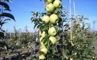 Как ухаживать за саженцами яблони
