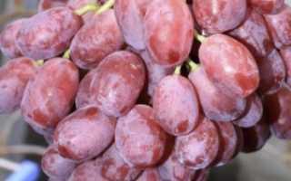 Винограда малиновый супер описание сорта