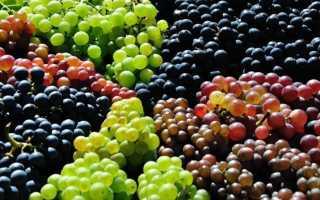 Популярные виды винограда