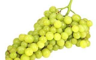 Выращиваем виноград кишмиш