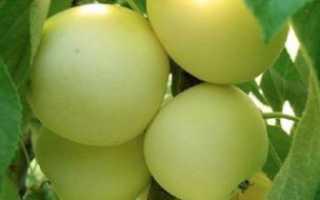 Сортовые особенности яблони медок
