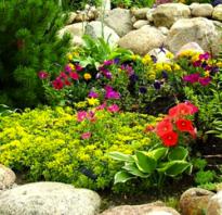 Цветы для альпийской горки многолетние фото