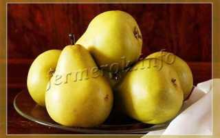 О популярных зимних сортах груш