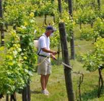 Баковые смеси для обработки винограда