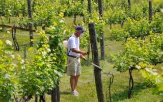 Препараты чем обработать виноград от болезней и вредителей схема применения