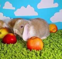 Можно ли давать кроликам спелые яблоки