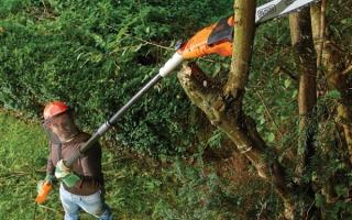 Сучкорезы для обрезки деревьев электрические