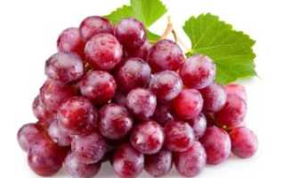 Характеристика винограда сорта ред глоуб