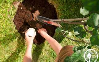 Какие фруктовые деревья посадить на участке