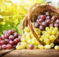 Новые устойчивые сорта винограда