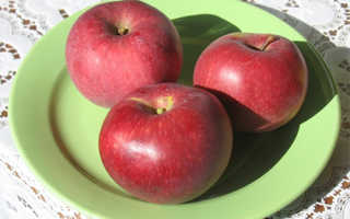 Сортовая характеристика яблони легенда