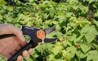 Нужно ли обрезать малину осенью