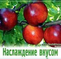 Зимостойкие сорта персиков
