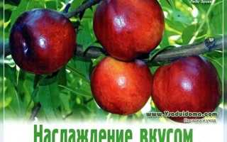 Какие сорта персиков самые зимостойкие