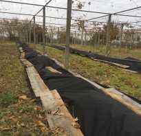 Подготовка к обработке винограда весной