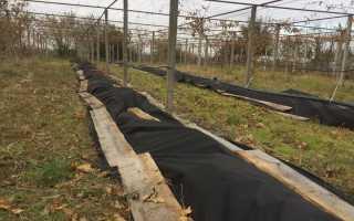 Что делают в винограднике весной