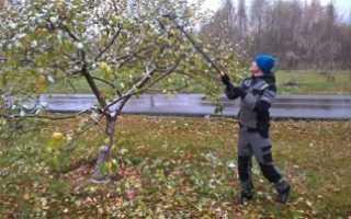 Обрезка фруктовых деревьев для улучшения плодоношения