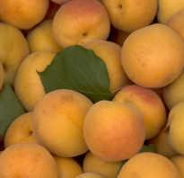Абрикос это ягода или фрукт ценность плодов и обрезка растений