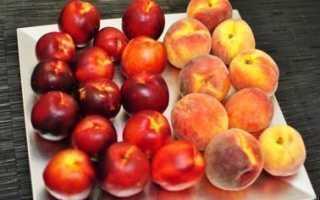 Отличия персика и нектарина