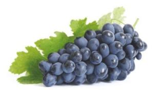 Описание винограда сорта изабелла