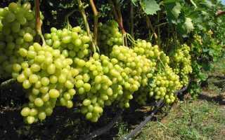Калийные удобрения для винограда осенью