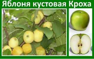 Яблоня румяная крохотуля