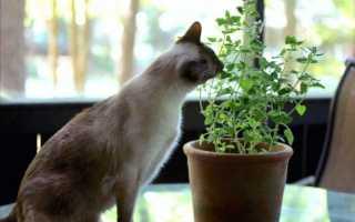 Цветы и кошки