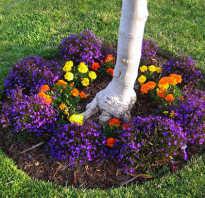 Что посадить под яблонями в саду