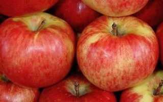 Описание и характеристики яблок сорта апорт технология посадки и уход