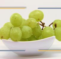 Полезные действия ягод винограда и его вред для организма