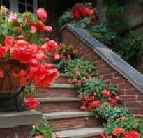 Цветы для кашпо свисающие на улице