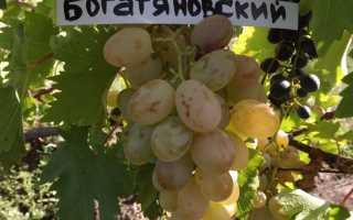 В чем главное преимущество винограда богатяновского
