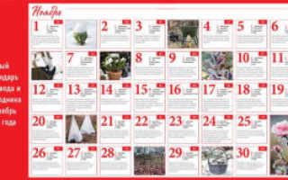 Лунный календарь садовода и огородника на ноябрь 2020 года
