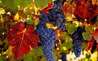 Уход за молодым виноградом осенью
