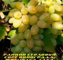Фрумоаса албэ как и для чего использовать виноград