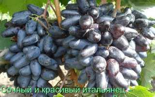 Характеристики винограда джованни