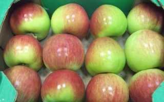 Яблоня сорта россошанское полосатое