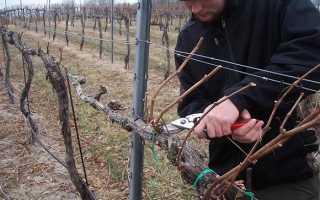 Как подготовить виноград к зиме правильные способы укрытия и утепления