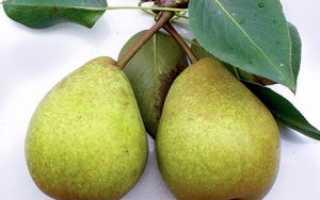 Сорт груши сказочная характеристики и особенности выращивания