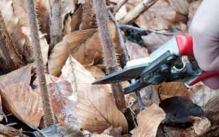 Осенний уход за малиной обрезка